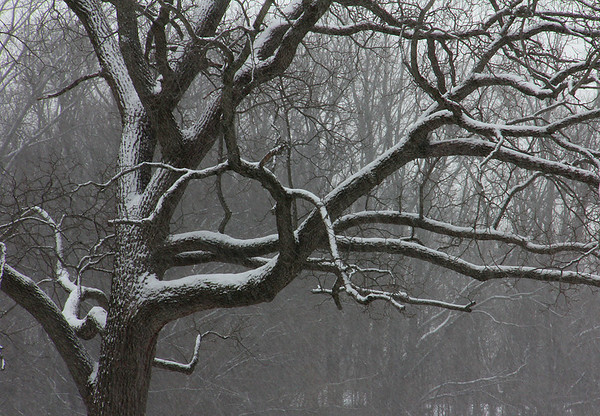 An artsy snow covered tree at Mounds Park during Thursday' snow.<br /> <br /> Photographer's Name: Jerry Byard<br /> Photographer's City and State: Anderson, Ind.