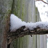 Dead limb, collecting snow on a cold January day.<br /> <br /> Photographer's Name: Harry Van Noy<br /> Photographer's City and State: Lafayette Township, Ind.