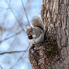 Squirrel enjoying lunch at Mounds State Park.<br /> <br /> Photographer's Name: Ruby Northcutt<br /> Photographer's City and State: Anderson, Ind.