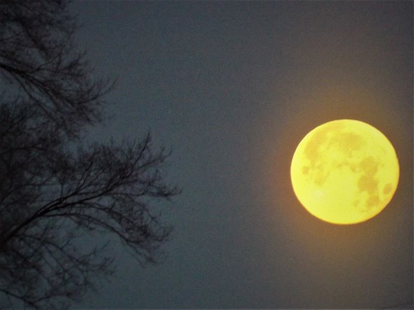 """Super Wolf"" moon in Richland Township.<br /> <br /> Photographer's Name: J.R. Rosencrans<br /> Photographer's City and State: Alexandria, Ind."