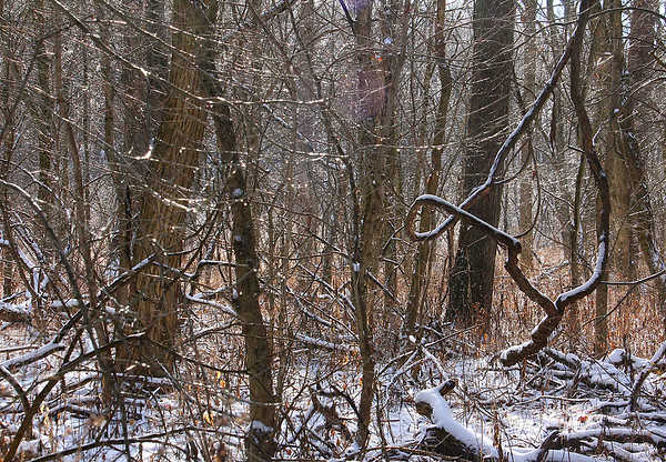 The woods at Mounds Park were an icy scene after the storm.<br /> <br /> Photographer's Name: Jerry Byard<br /> Photographer's City and State: Anderson, Ind.