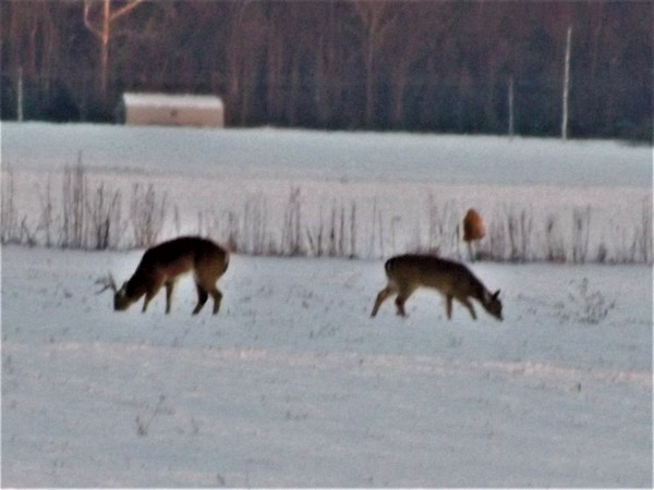 Having a cold supper at my farm in Richland Township.<br /> <br /> Photographer's Name: J.R. Rosencrans<br /> Photographer's City and State: Alexandria, Ind.