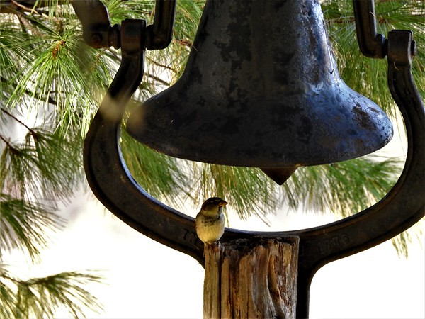Farm bell during the snowing.<br /> <br /> Photographer's Name: Sharon Markle<br /> Photographer's City and State: Markleville, Ind.