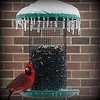 A cardinal at the feeder this evening.<br /> <br /> Photographer's Name: Debra Howell<br /> Photographer's City and State: Pendleton, Ind.