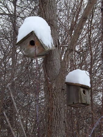 """""""The tree houses.""""<br /> <br /> Photographer's Name: J.R. Rosencrans<br /> Photographer's City and State: Alexandria, Ind."""