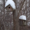 """The tree houses.""<br /> <br /> Photographer's Name: J.R. Rosencrans<br /> Photographer's City and State: Alexandria, Ind."