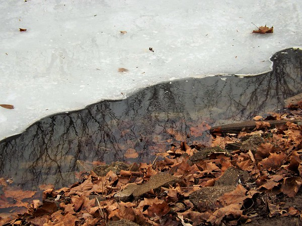 """The Trifecta:"" Leaves, water and ice at Mounds Park.<br /> <br /> Photographer's Name: J.R. Rosencrans<br /> Photographer's City and State: Alexandria, Ind."