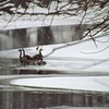 Time to huddle up...geese on the frozen river.<br /> <br /> Photographer's Name: J.R. Rosencrans<br /> Photographer's City and State: Alexandria, Ind.