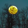 January wolf moon...photo taken in Richland Township.<br /> <br /> Photographer's Name: J.R. Rosencrans<br /> Photographer's City and State: Alexandria, Ind.