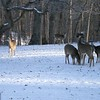 Six deer in our back yard on Birch Street in north Anderson.<br /> <br /> Photographer's Name: Lowell Auker<br /> Photographer's City and State: Anderson, Ind.