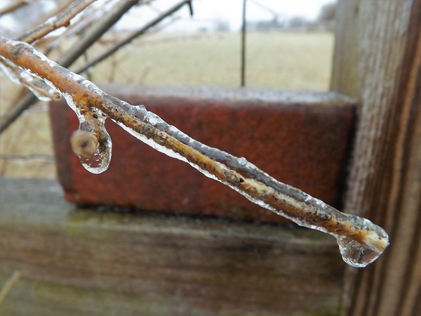 """""""Twiggy"""" ice in Richland Township.<br /> <br /> Photographer's Name: J.R. Rosencrans<br /> Photographer's City and State: Alexandria, Ind."""