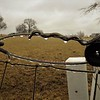 Frozen fence.<br /> <br /> Photographer's Name: J.R. Rosencrans<br /> Photographer's City and State: Alexandria, Ind.