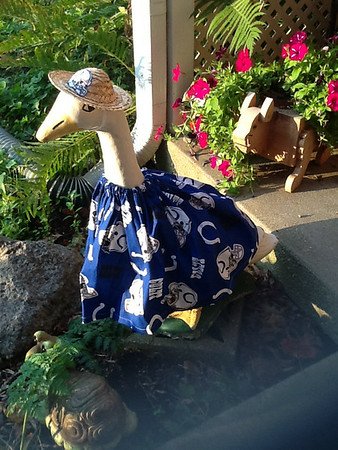 Quacking for the COLTS!<br /> <br /> Photographer's Name:  Shirley Markley<br /> Photographers City and Country: Anderson, Ind.
