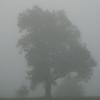 Farm fog.<br /> <br /> Photographer's Name: J.R. Rosencrans<br /> Photographer's City and State: Alexandria, Ind.