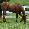 """A new horse, """"Red Rider,"""" at my farm in Richland Township.<br /> <br /> Photographer's Name: J.R. Rosencrans<br /> Photographer's City and State: Alexandria, Ind."""