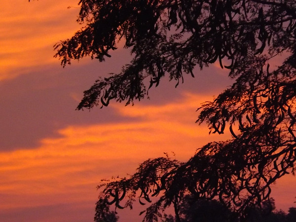 A hot July morning, taken at the break of dawn at my farm in Richland Township.<br /> <br /> Photographer's Name: J.R. Rosencrans<br /> Photographer's City and State: Alexandria, Ind.