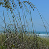 Looking out through the grasses to Cocoa Beach, Fla.<br /> <br /> Photographer's Name: Janet Hoffman<br /> Photographer's City and State: Frankton, Ind.