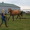 Autumn Coxe teaching her horse with her body language.<br /> <br /> Photographer's Name: J.R. Rosencrans<br /> Photographer's City and State: Alexandria, Ind.