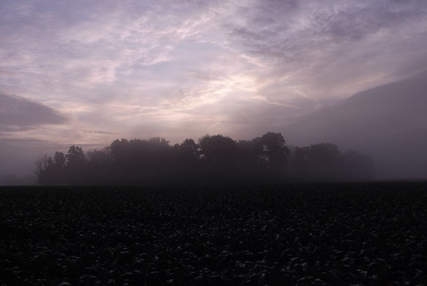 Cornfield fog in Richland Township.<br /> <br /> Photographer's Name: J.R. Rosencrans<br /> Photographer's City and State: Alexandria, Ind.