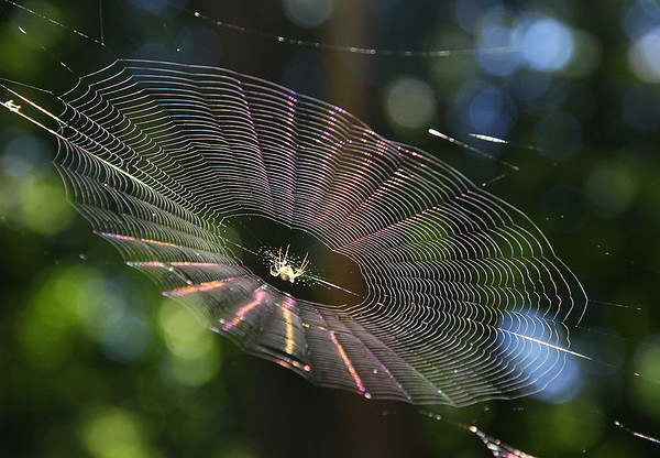The morning sun is showing the detail in this spider web at Mounds Park.<br /> <br /> Photographer's Name: Jerry Byard<br /> Photographer's City and State: Anderson, Ind.