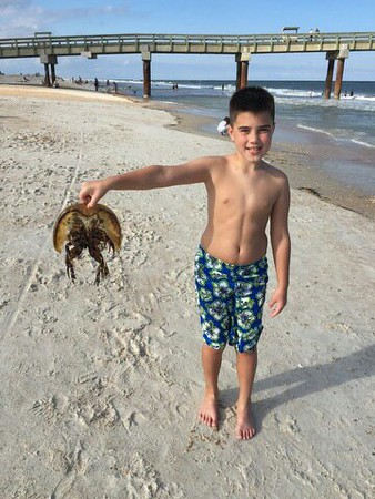 This is my grandson Gus holding up a horseshoe crab he found on the beach on a recent trip to Florida.<br /> <br /> Photographer's Name: Pete Dodd<br /> Photographer's City and State: Anderson, Ind.
