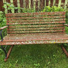"""Wet Spring"" (backyard bench moss).<br /> <br /> Photographer's Name: J.R. Rosencrans<br /> Photographer's City and State: Alexandria, Ind."