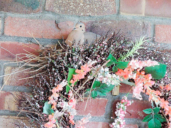 Marietta Lutz of Anderson photographed this Mourning Dove right before it left the nest for the last time.
