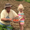 Everett Muterspaugh and his great-granddaughter Josie Roundtree picking strawberries out of his garden.<br /> <br /> Photographer's Name: Lisa Holsinger<br /> Photographer's City and State: Anderson, Ind.