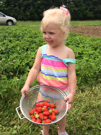 Josie Roundtree picking strawberries.<br /> <br /> Photographer's Name: Lisa Holsinger<br /> Photographer's City and State: Anderson, Ind.