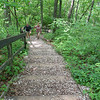 A hike with two friends at Spring Mill State Park shows the ruggedness of an uphill climb.<br /> <br /> Photographer's Name: Jerry Byard<br /> Photographer's City and State: Anderson, Ind.