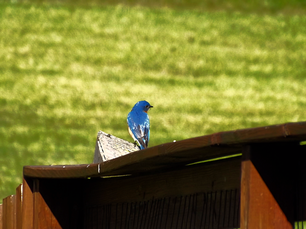 Bluebird boardwalk.<br /> <br /> Photographer's Name: J.R. Rosencrans<br /> Photographer's City and State: Alexandria, Ind.
