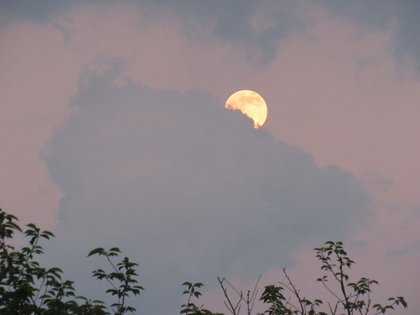Strawberry moon coming out on Father's Day evening.<br /> <br /> Photographer's Name: Harry Van Noy<br /> Photographer's City and State: Lafayette Township, Ind.