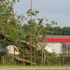 Tree downed by Wednesday's winds.<br /> <br /> Photographer's Name: Harry Van Noy<br /> Photographer's City and State: Lafayette Township, Ind.