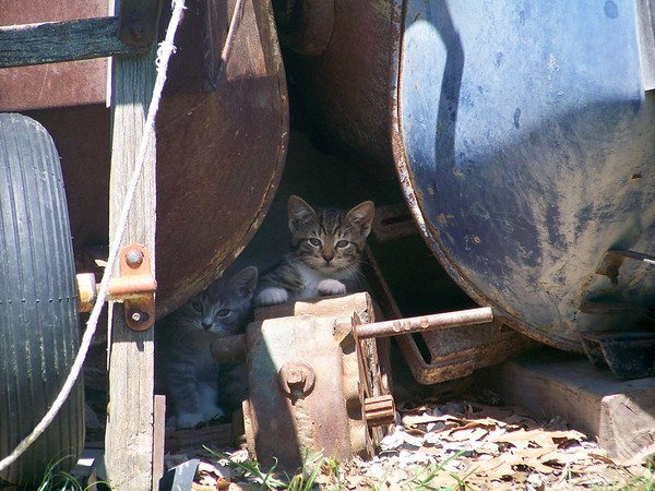Everyone needs a kitty!<br /> <br /> Photographer's Name: Linda  Daughtery<br /> Photographer's City and State: Anderson, Ind.