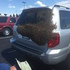 Bee swarm visits Hoosier Park Racing & Casino<br /> <br /> Photographer's Name: John Suko<br /> Photographer's City and State: Anderson, Ind.