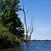 Dead wood point at Lake Summit.<br /> <br /> Photographer's Name: J.R. Rosencrans<br /> Photographer's City and State: Alexandria, Ind.