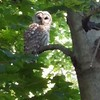 A beautiful owl.<br /> <br /> Photographer's Name: Jason Bower<br /> Photographer's City and State: Anderson, Ind.