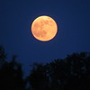 June's strawberry moon.<br /> <br /> Photographer's Name: Harry Van Noy<br /> Photographer's City and State: Lafayette Township, Ind.