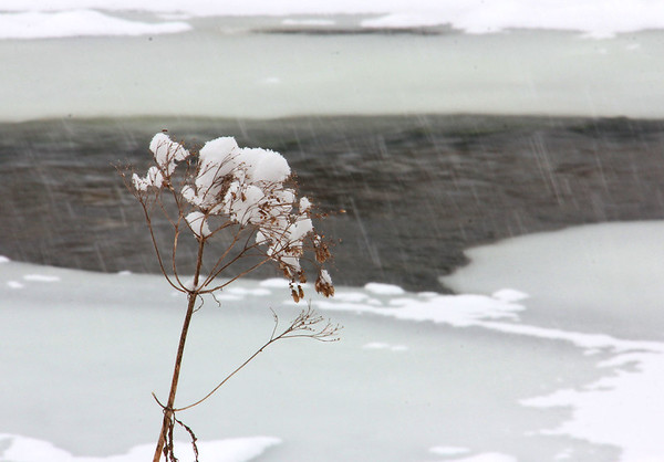 An artistic weed is catching the falling snow at Mounds Park along Trail 5.<br /> <br /> Photographer's Name: Jerry Byard<br /> Photographer's City and State: Anderson, Ind.