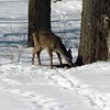 """""""Comes in like a lamb:"""" Taken in my woods in Richland Township.<br /> <br /> Photographer's Name: J.R. Rosencrans<br /> Photographer's City and State: Alexandria, Ind."""
