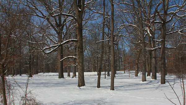 The Great Mound at Mounds Park was basking in sunlight the day after the big snow.<br /> <br /> Photographer's Name: Jerry  Byard<br /> Photographer's City and State: Anderson, Ind.