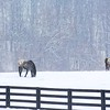 Two horses brave the elements in southern Madison County.<br /> <br /> Photographer's Name: Brian Fox<br /> Photographer's City and State: Anderson, Ind.