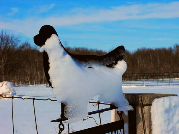Snow dog at my farm in Richland Township.<br /> <br /> Photographer's Name: J.R. Rosencrans<br /> Photographer's City and State: Alexandria, Ind.