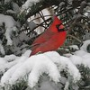 Photographer's Name: Bob Jackson<br /> Photographer's City and State: Anderson, Ind.