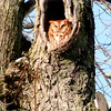 An owl nesting in a tree.<br /> <br /> Photographer's Name: Dave Stohler<br /> Photographer's City and State: Markleville, Ind.