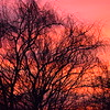 Recent sunset in Richland Woods.<br /> <br /> Photographer's Name: Deborah Allen<br /> Photographer's City and State: Anderson, Ind.