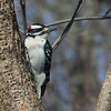 A woodpecker at Mounds Park waiting on a feeder.<br /> <br /> Photographer's Name: Jerry Byard<br /> Photographer's City and State: Anderson, Ind.