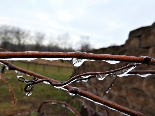 Frozen spring rain in Richland Township.<br /> <br /> Photographer's Name: J.R. Rosencrans<br /> Photographer's City and State: Alexandria, Ind.