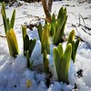 Cold enough to snow, warm enough to grow.<br /> <br /> Photographer's Name: J.R. Rosencrans<br /> Photographer's City and State: Alexandria, Ind.