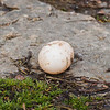 A lone duck egg at Falls Park.<br /> <br /> Photographer's Name: Ruby Northcutt<br /> Photographer's City and State: Anderson, Ind.